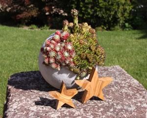 Sterne aus Olivenholz, gehobelt und geölt