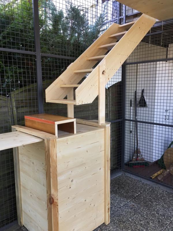 Turm und obere Treppe der Anlage Norwegische Waldkatzen